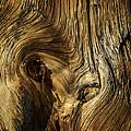 Gnarled Wood by David Waldrop