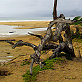 Gnarly Tree by Barbara Snyder