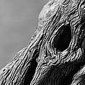 Gnarly Tree II by Michael McGowan