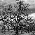 Gnarly Tree by Sennie Pierson