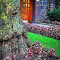Gnarly Tree With Flowers by Miriam Danar