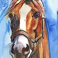 Horse Painting Of California Chrome Go Chrome by Maria's Watercolor