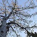 Go Climb A Tree by Bill Cannon