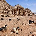 Goats In Front Of The Monastery At Petra In Jordan by Robert Preston