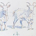 Goats by Mike Jory