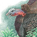 Gobbler by Kenneth Stock