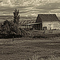 God Bless America Barn Black And White by Cathy Anderson