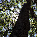 Goddess Tree by Nicki La Rosa