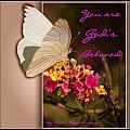 God's Beloved by Leticia Latocki