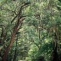God's Canopy by Sennie Pierson