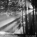 God's Light by David Simmer