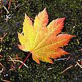 God's Perfect Leaf by Buddy Mays
