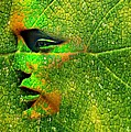 Going Green by Diana Angstadt