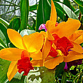 Gold And Red Orchids At Maerim Orchid Farm In Chiang Mai-thailan by Ruth Hager