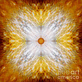 Gold And White Light Mandala by Susan Bloom