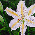 Gold Band Lily by Laura Wilson