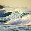 Gold Crested Surf by Lori Seaman