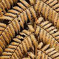 Gold Leaf Fern by Bob Phillips