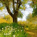 Golden Afternoon by Susan Eileen Evans