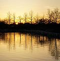 Golden And Peaceful - A Sunset On Lake Ontario In Toronto Canada by Georgia Mizuleva