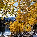 Golden Aspen On The Lake by Kathleen Bishop