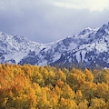 Golden Aspens With Mt. Sneffels by Beth Wald