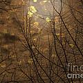 Golden Autumn Abstract Sky by Janice Pariza