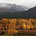 Golden Autumn - Cairngorm Mountains by Phil Banks