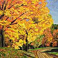Golden Autumn Colors by Richard Nowak