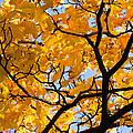 Golden Autumn - Featured 3 by Alexander Senin