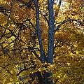 Golden Autumn Foliage At Palenville In October by Terrance DePietro