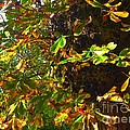 Golden Autumn by Joan-Violet Stretch