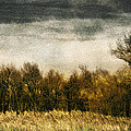 Golden Autumn by John Anderson