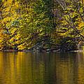 Golden Autumn by Karol Livote