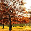 Golden Autumn by Lana Enderle