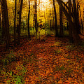 Golden Autumn  by Susan McMenamin