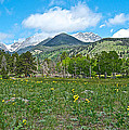 Golden Banner In Horseshoe Park In Rocky Mountain Np-co- by Ruth Hager