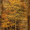 Golden Birch by Liz  Alderdice