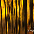 Golden Blur by Anne Gilbert