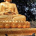Golden Buddha by Sue Harper