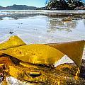 Sun Lit Seaweed by Roxy Hurtubise