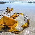 Seaweed Sun Glow by Roxy Hurtubise
