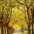 Golden Canopy by KG Thienemann