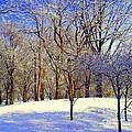 Golden Central Park by Noa Yerushalmi