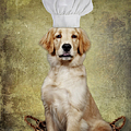 Golden Chef by Susan Candelario