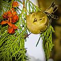 Golden Christmas Finch by LeeAnn McLaneGoetz McLaneGoetzStudioLLCcom