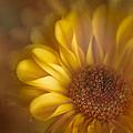 Golden Dahlia by David and Carol Kelly