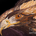 Golden Eagle Close Up Painting By Carolyn Bennett by Simon Bratt Photography LRPS