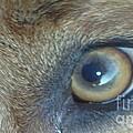 Golden Eye Of Norbu 12 18 2011 by Feile Case
