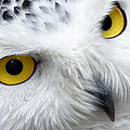 Golden Eyes by Pixabay